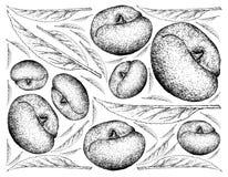 Fundo tirado mão de Angel Peach Fruits ilustração do vetor