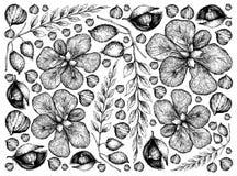 Fundo tirado m?o de frutos e de Chick Pea de Terminalia Catappa ilustração do vetor