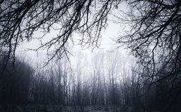 Fundo torcido escuro dos ramos no ajuste assombrado Foto de Stock