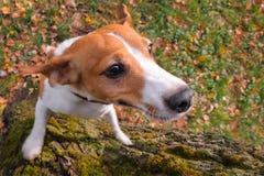 Fundo treinado dos animais de estimação Animal de estimação bonito Melhor amigo foto de stock royalty free