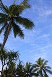 Fundo tropical Fotografia de Stock