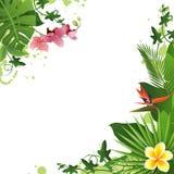 Fundo tropical ilustração royalty free