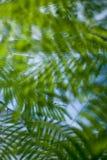 Fundo tropical Imagem de Stock Royalty Free