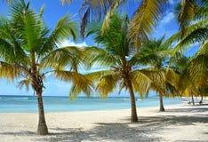 Fundo tropical Imagens de Stock