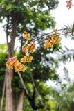 Fundo tropical amarelo abstrato da flor As flores tropicais bonitas em um verde borraram o fundo Bali, Indonésia Imagem de Stock