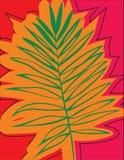 Fundo tropical bonito da silhueta da folha da palmeira Fotografia de Stock
