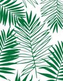 Fundo tropical bonito da silhueta da folha da palmeira Foto de Stock Royalty Free