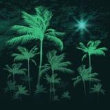 Fundo tropical com as palmeiras em nigh, ilustração do vetor ilustração stock