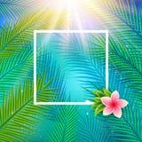 Fundo tropical com folhas de palmeira ilustração stock