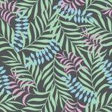 Fundo tropical com folhas de palmeira Foto de Stock