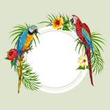 Fundo tropical com papagaios Ilustração Royalty Free