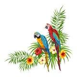 Fundo tropical com papagaios Ilustração Stock