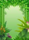 Fundo tropical da floresta da beleza Foto de Stock