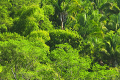 Fundo tropical da selva Foto de Stock