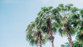 Fundo tropical das árvores imagem de stock