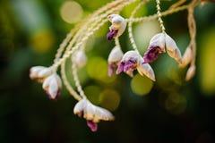 Fundo tropical do borrão da flor da flor Foto de Stock Royalty Free