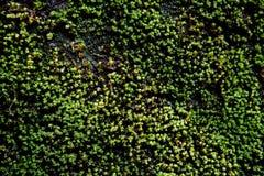 Fundo tropical do musgo Foto de Stock Royalty Free