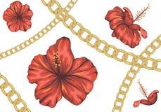 Fundo tropical do vetor com as flores vermelhas do hibiscus e a corrente dourada ilustração stock