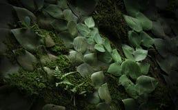 Fundo tropical escuro com plantas, musgo e a samambaia de entrançamento imagem de stock