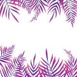 Fundo tropical exótico das folhas de palmeira ilustração royalty free