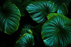 Fundo tropical fotografia de stock royalty free