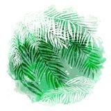 Fundo tropical verde na moda, folhas exóticas, palma de coco Ilustração botânica do vetor, elementos para o projeto Fotos de Stock