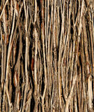 Fundo - varas dentro de uma cerca da escova Fotos de Stock Royalty Free