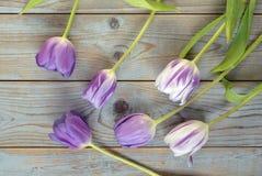Fundo vazio de madeira cinzento do espaço da cópia com tulipas coloridas Imagens de Stock