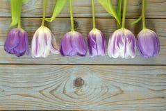 Fundo vazio de madeira cinzento do espaço da cópia com tulipas coloridas Imagens de Stock Royalty Free
