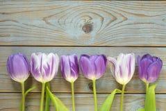Fundo vazio de madeira cinzento do espaço da cópia com tulipas coloridas Foto de Stock Royalty Free