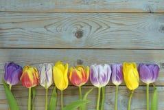 Fundo vazio de madeira cinzento do espaço da cópia com tulipas coloridas Imagem de Stock Royalty Free