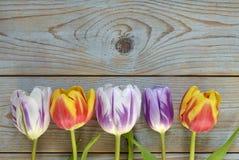 Fundo vazio de madeira cinzento do espaço da cópia com tulipas coloridas Foto de Stock