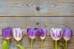 Fundo vazio de madeira cinzento do espaço da cópia com tulipas roxas Fotografia de Stock