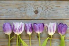 Fundo vazio de madeira cinzento do espaço da cópia com tulipas roxas Fotos de Stock Royalty Free