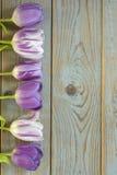 Fundo vazio de madeira cinzento do espaço da cópia com tulipas roxas Imagens de Stock