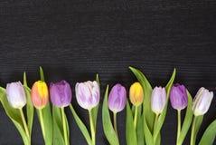 Fundo vazio de madeira do espaço da cópia do wenge preto com tulipas coloridas Fotografia de Stock Royalty Free