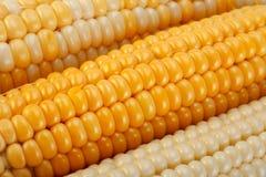 Fundo vegatable do close up do milho fotos de stock