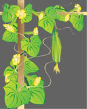 Fundo vegetal abstrato. Foto de Stock Royalty Free