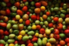 Fundo vegetal gre amarelo vermelho dos tomates diferentes da maturidade fotografia de stock