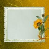Fundo velho com frame e flores Fotos de Stock