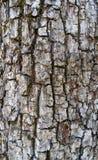 Fundo velho da casca de árvore Fotos de Stock