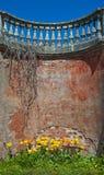Fundo velho da parede de tijolo com tulipas Fotos de Stock