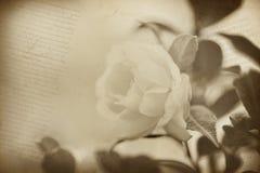 Fundo velho da textura do papel da flor Imagem de Stock Royalty Free