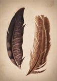 Fundo velho da textura do papel do vintage com penas Imagens de Stock Royalty Free