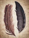 Fundo velho da textura do papel do vintage com penas Foto de Stock