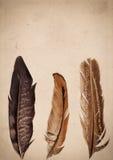 Fundo velho da textura do papel do vintage com penas Imagem de Stock Royalty Free