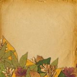 Fundo velho do sumário do grunge com folhas de outono Fotografia de Stock