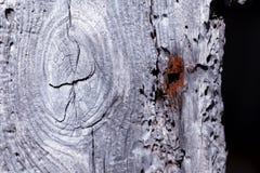 Fundo velho e deteriorado da madeira fotografia de stock royalty free