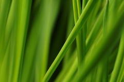 Fundo verde Fotografia de Stock