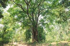 Fundo verde abstrato do bokeh na selva imagens de stock